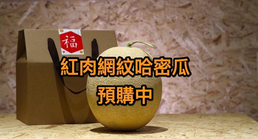 [熱門預購] 紅肉網紋哈密瓜 單顆2台斤以上 2千免運